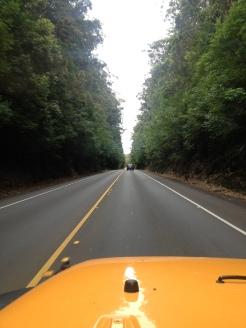 En route to Hilo.